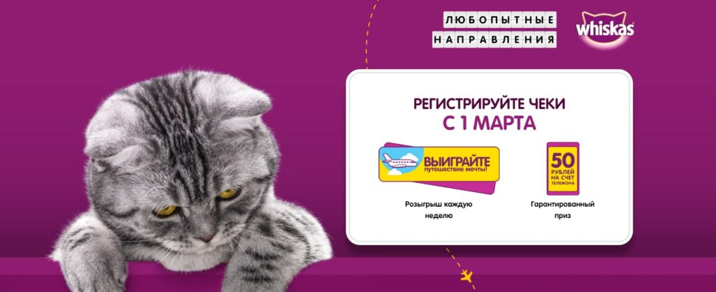 День кошек 2020 акция